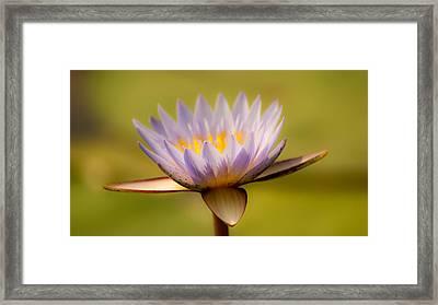 Purple Promise Framed Print