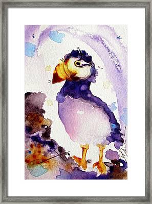 Purple Puffin Framed Print by Dawn Derman