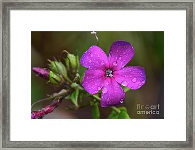 Purple Rain... Framed Print