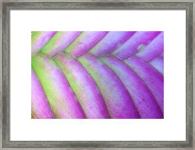 Purple Framed Print by Rebecca Skinner