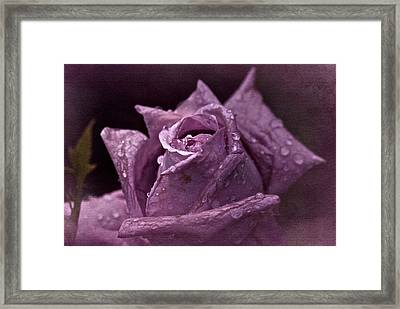 Purple Rose Framed Print