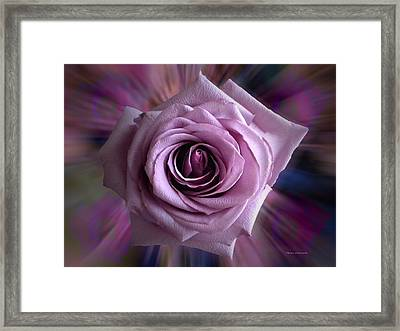 Purple Rose Framed Print by Thomas Woolworth