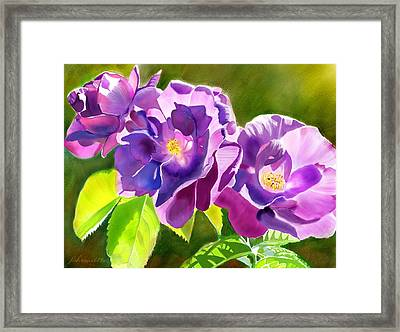 Purple Roses Framed Print by Joan A Hamilton
