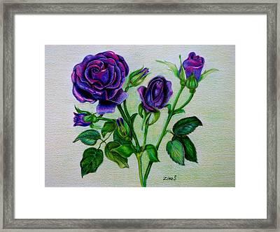 Purple Roses Framed Print by Zina Stromberg