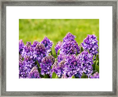 Purple Scent In The Air Framed Print