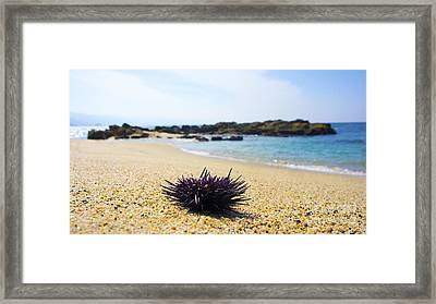 Purple Seastar Framed Print by Aged Pixel
