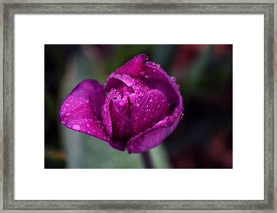 Purple Framed Print by Silke Brubaker