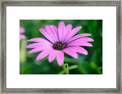 Purple Smile Framed Print by Ivelin Donchev