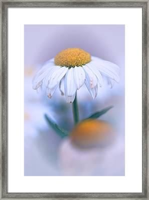 Purple Softness Framed Print by Karol Livote