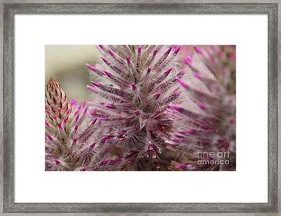 Purple Spike Framed Print by Kenny Glotfelty