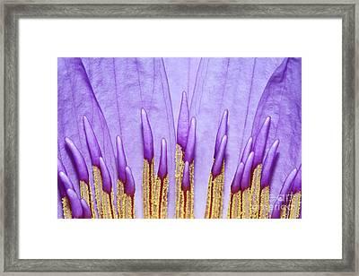 Purple Spires Framed Print