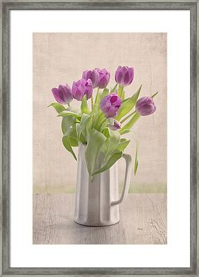 Purple Spring Tulips Framed Print