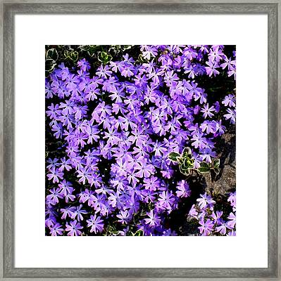 'purple Springtime' Framed Print