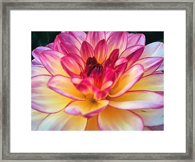 Purple Star Flower Framed Print by Beril Sirmacek