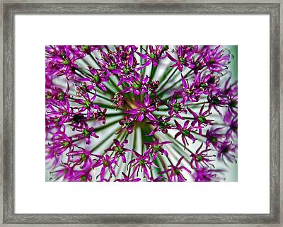Framed Print featuring the photograph Purple Starlight by Aimee L Maher Photography and Art Visit ALMGallerydotcom