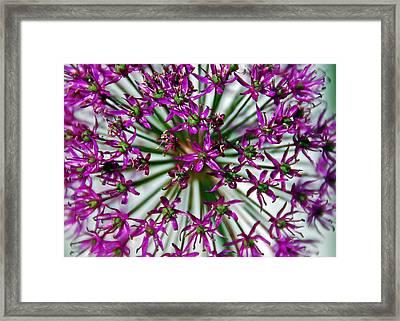 Purple Starlight Framed Print by Aimee L Maher Photography and Art Visit ALMGallerydotcom