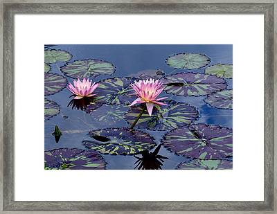 Waterlily With Purple Striped Lily Pads Framed Print