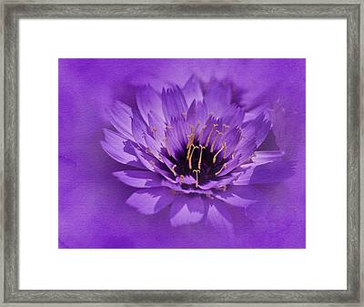 Purple Study Framed Print