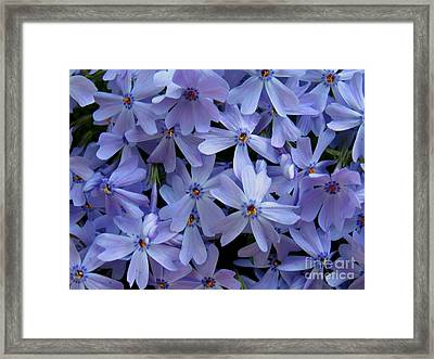 Purple Sunshine Framed Print by Patti Whitten