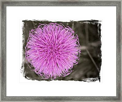Purple Thistle - 1 Framed Print by Rudy Umans