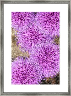 Purple Thistle - 2 Framed Print