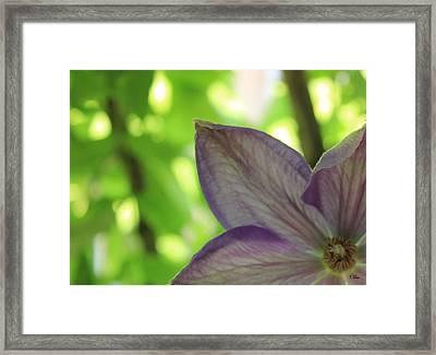 Purple Framed Print by Thomas Leon