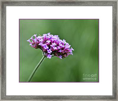 Framed Print featuring the photograph Purple Top Flower by Maria Janicki