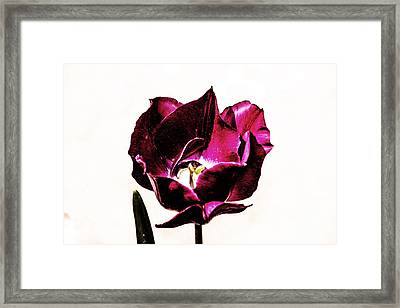 Framed Print featuring the photograph Purple Tulip by Angela DeFrias