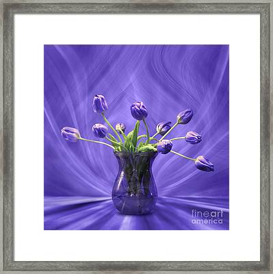 Purple Tulips In Purple Room Framed Print