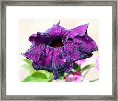 Purple Velvet Framed Print by Krissy Katsimbras