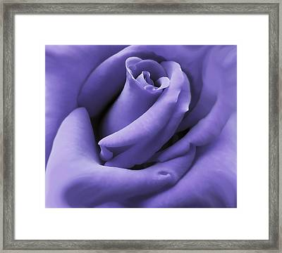 Purple Velvet Rose Flower Framed Print by Jennie Marie Schell
