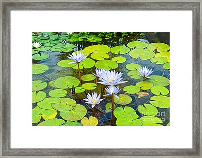 Purple Water Lilies In A Pond. Framed Print by Jamie Pham