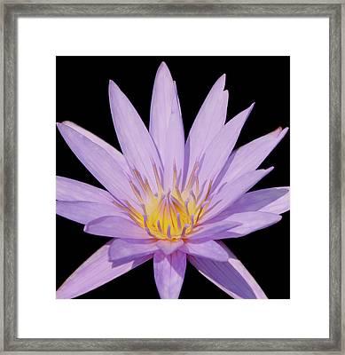 Purple Water Lily Framed Print by Kim Hojnacki