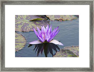 Purple Water Lily With Lily Pads One Framed Print