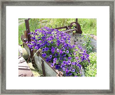 Purple Wave Petunias In Rusty Horse Drawn Spreader Framed Print