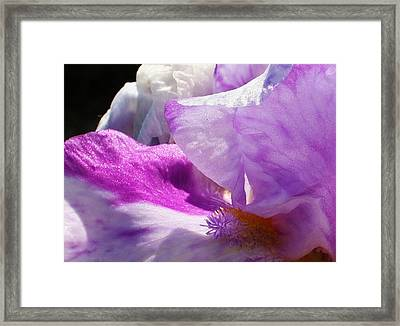 Purple Waves Framed Print by Bruce Bley