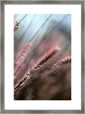 Purple Waves Of Grain Fine Art Print Framed Print