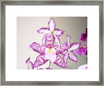 Purple White Orchid Flowers Art Prints Framed Print by Baslee Troutman