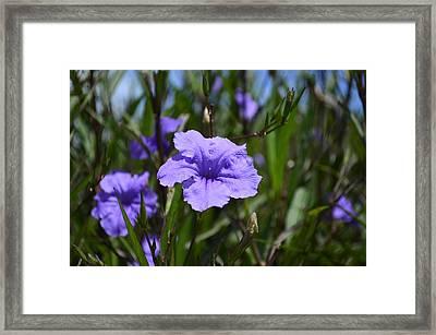 Purple Wild Flower Framed Print