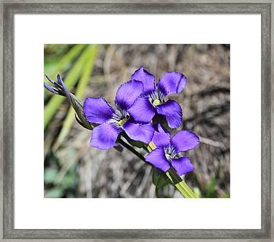 Purple Wildflower Framed Print