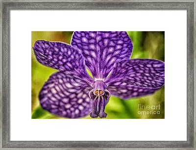 Purple Wonder Framed Print