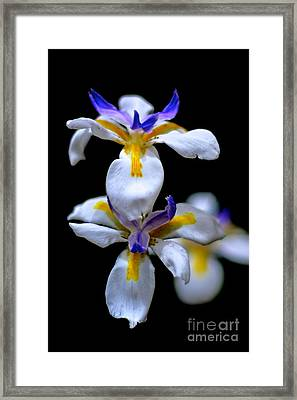 Purple Yellow And White Framed Print by Bobby Mandal