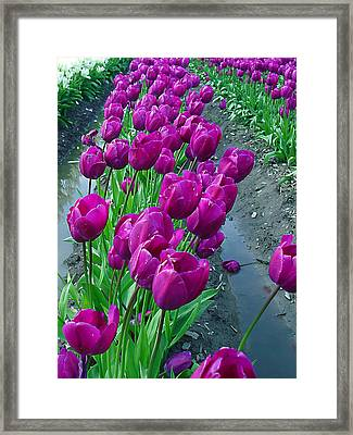 Purplepassion Framed Print