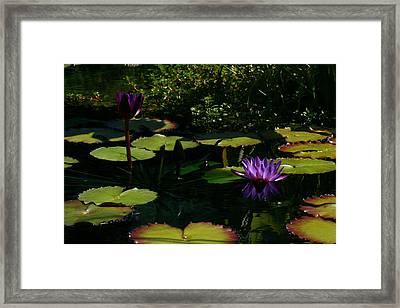 Purplette Framed Print by Doug Norkum
