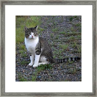 Purr-fectly Posed Framed Print