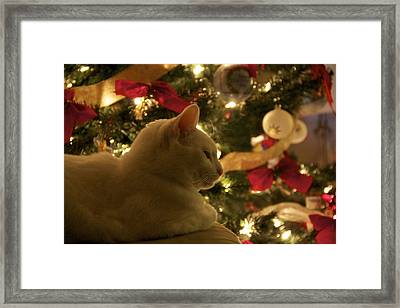 Purrfect Holidays Framed Print