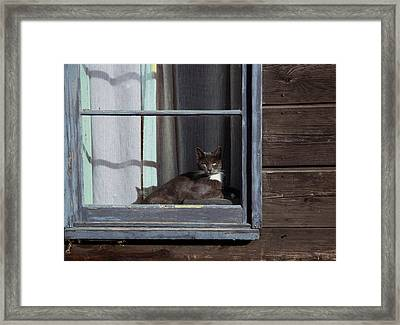 Purrfect Framed Print by Kathy Bassett