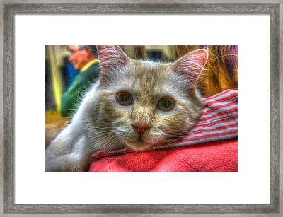 Framed Print featuring the photograph Purrfect Companion by Dennis Baswell