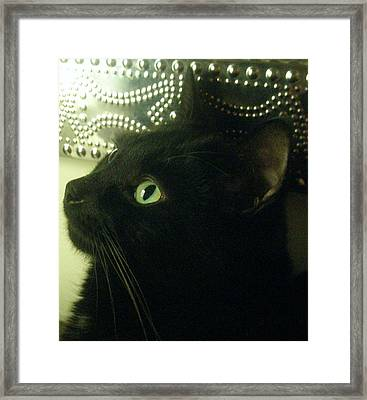 Purrfect Pose Framed Print