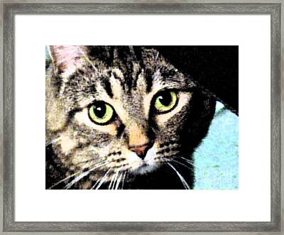 Framed Print featuring the photograph Purrfectly Bright Eyed by Nina Silver
